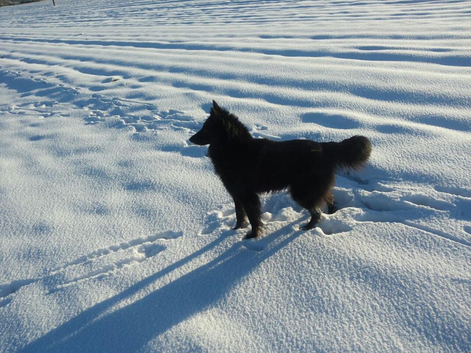 cora-in-sneeuw