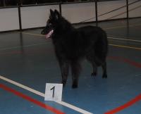 Beste pup en 10e in de eindkeuring